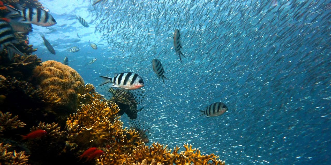 A deep-dive is necessary to find colourful coral: why qualitative research matters for organisations